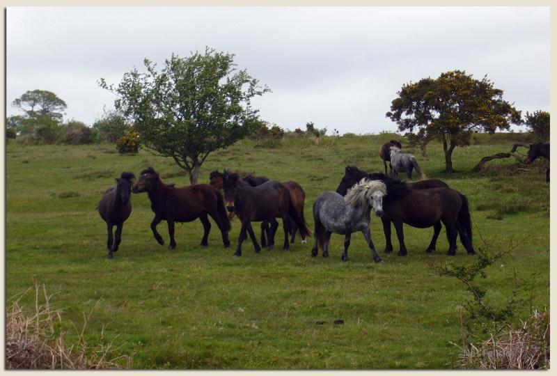 dartmoor 10w