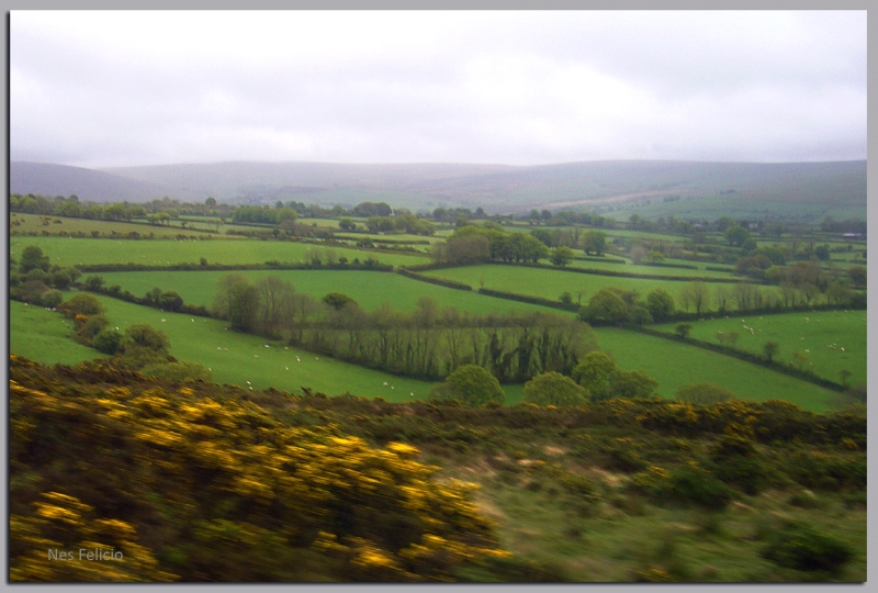 dartmoor 1w