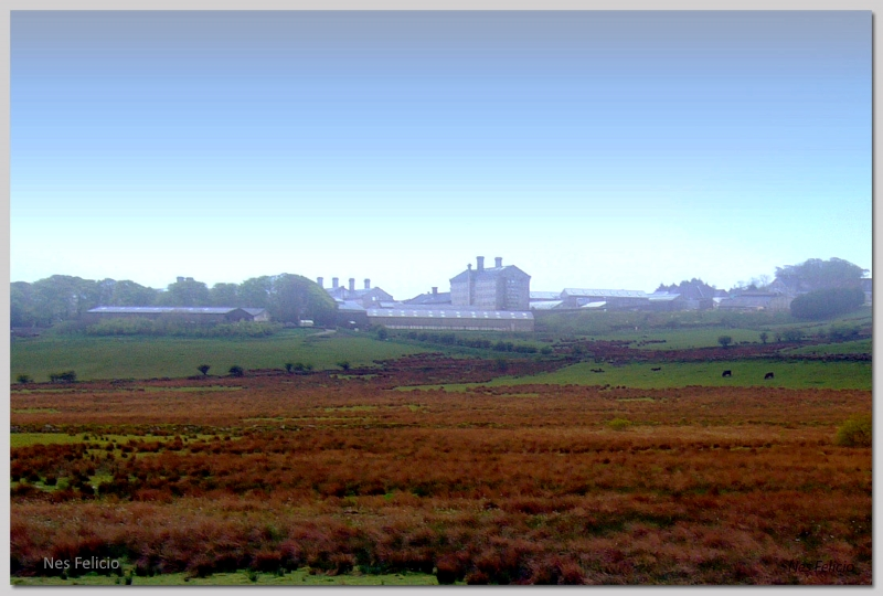dartmoor 4w