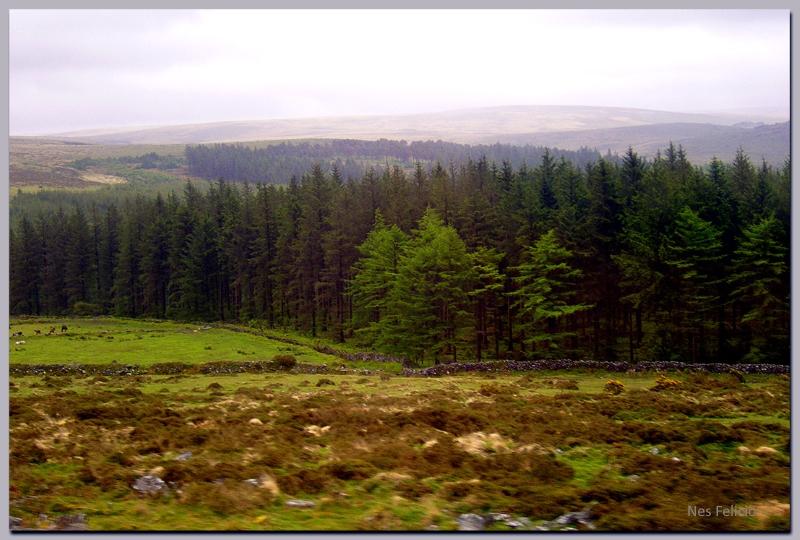 dartmoor 9w