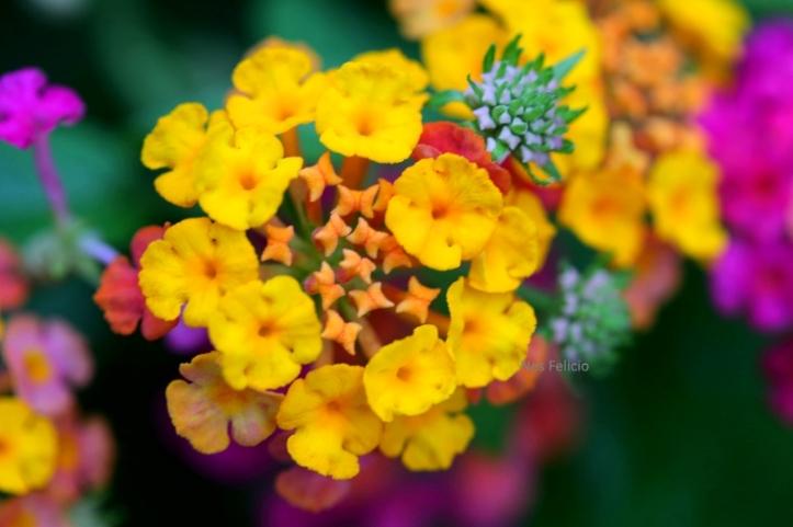 garden_3016