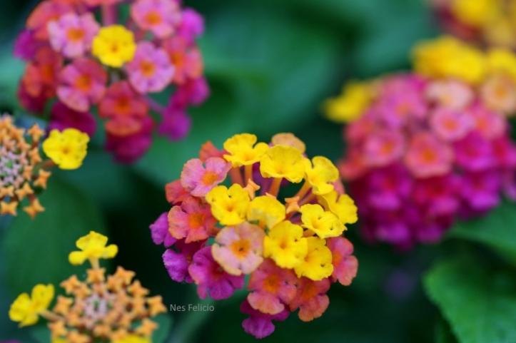 garden_3017