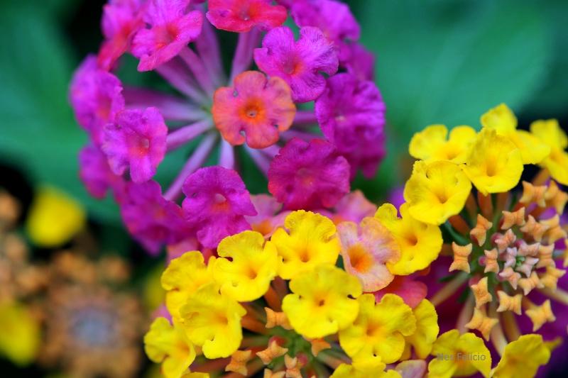 garden_3019