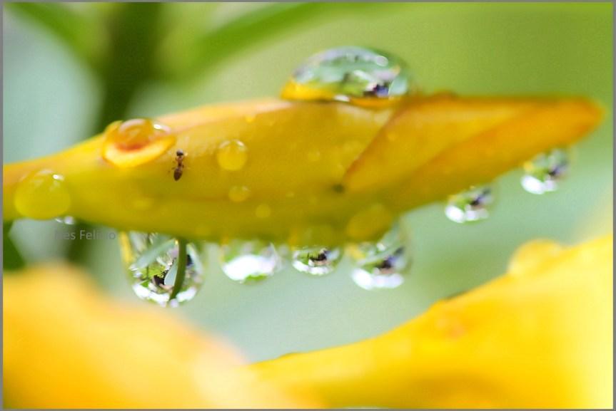rain_6773b