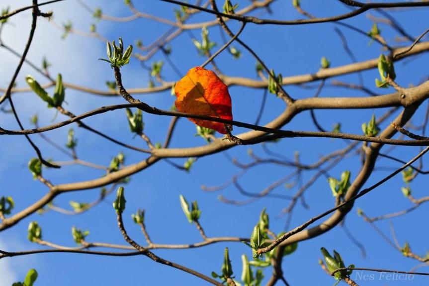 leavesa