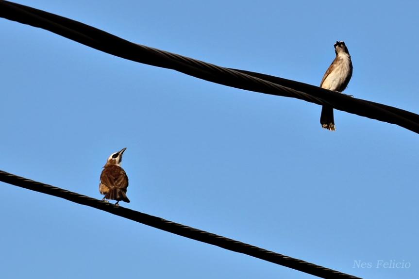 birdwire3