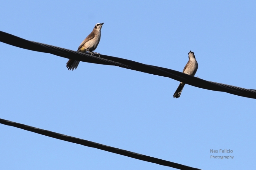 birdwire4_5544