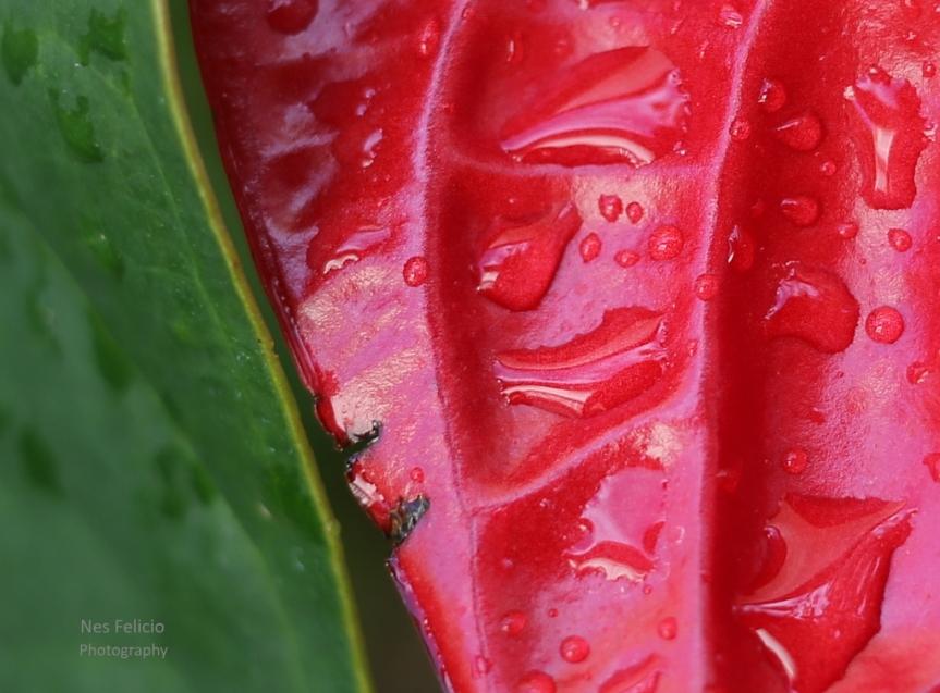 leaf_7496