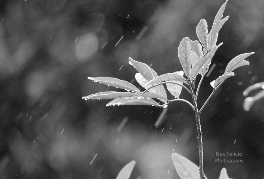 rain_9937