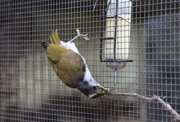 birds_1719a
