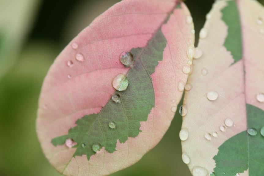 leaf_3711