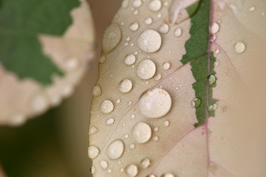 leaf_3730a