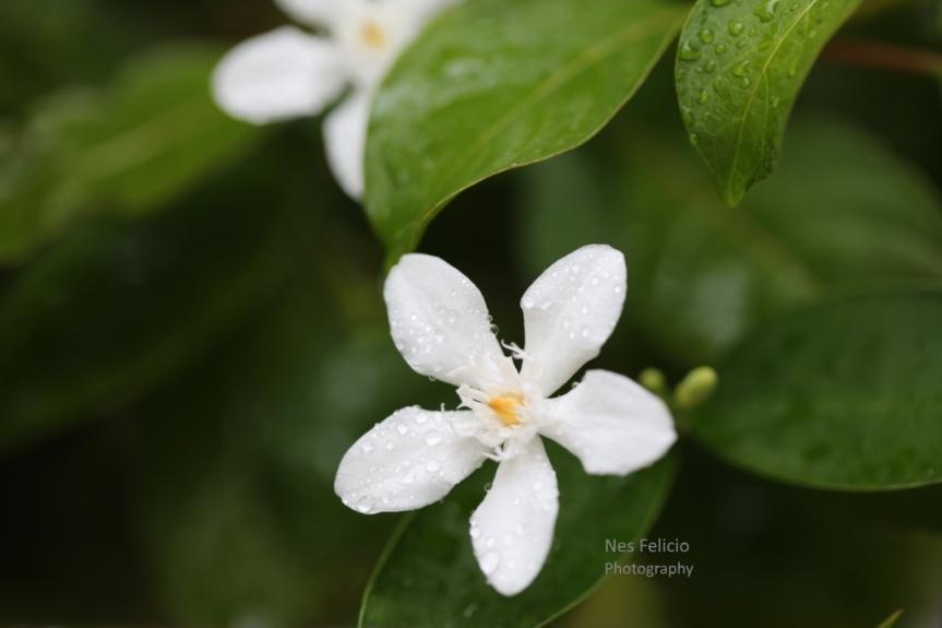 flower_3605