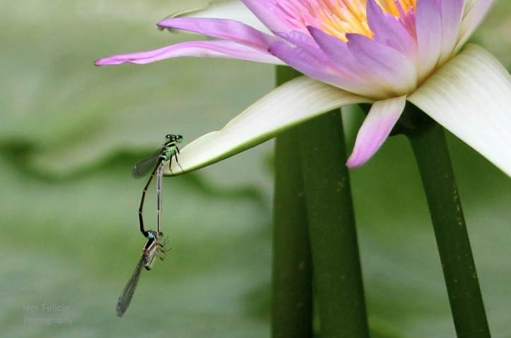 dragonflies_4217