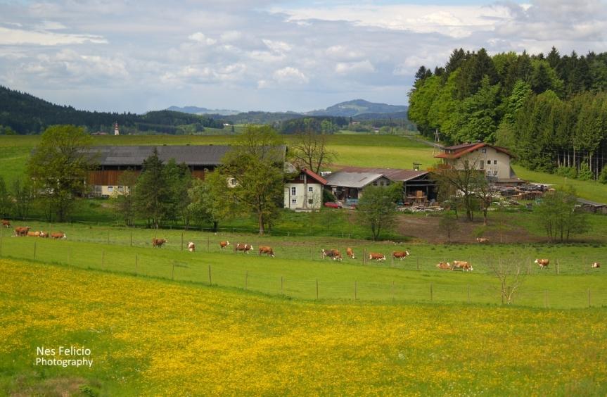 austria_0993