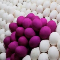 Purple Eggs, Anyone?