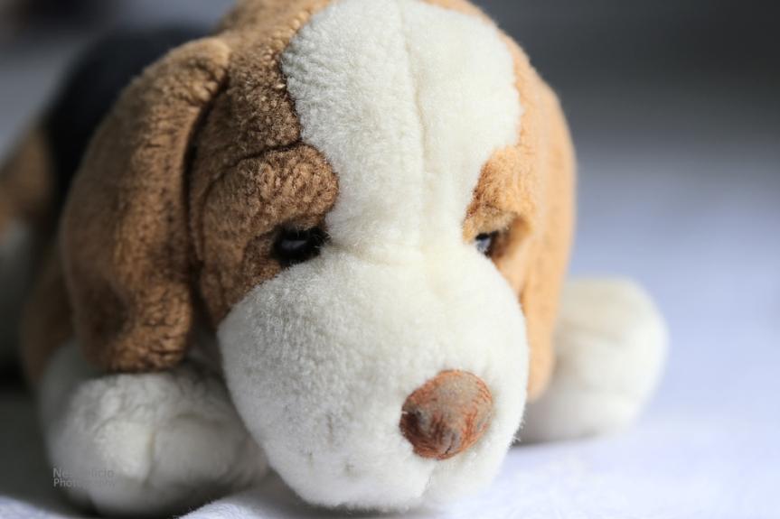 beagle_4912