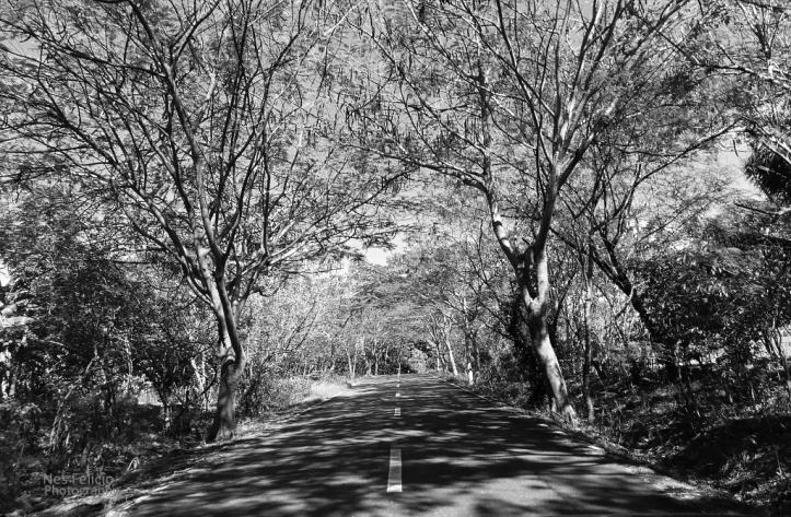 road_0299
