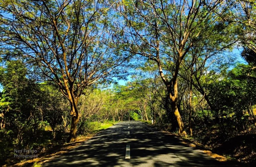 road_0338