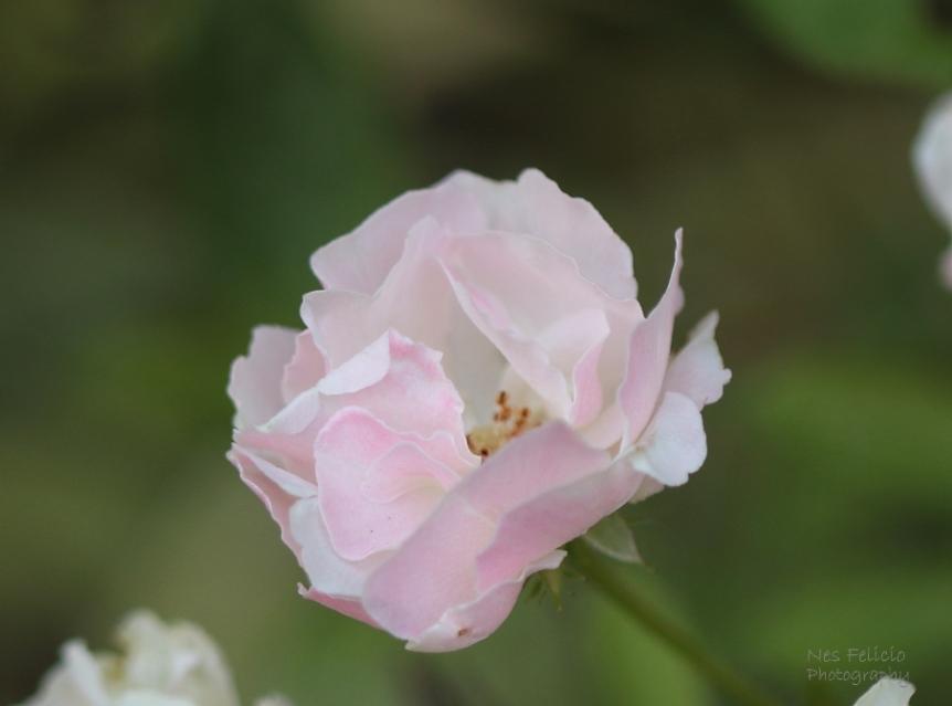 bloom_6108c