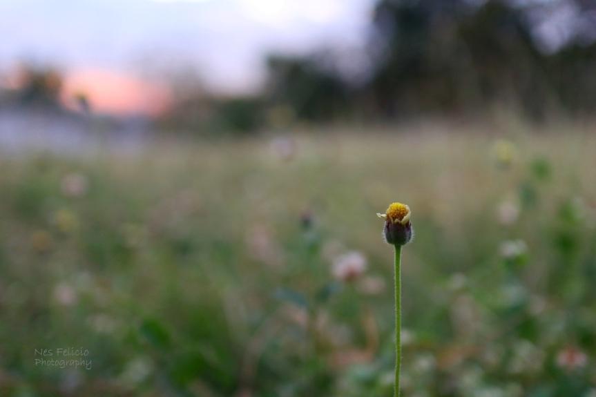 grass_5202