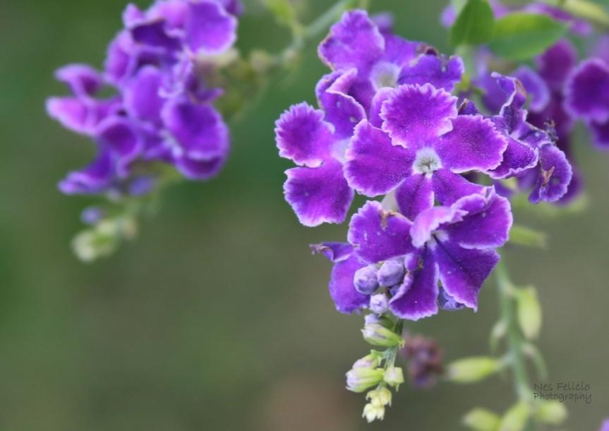 garden_5303o