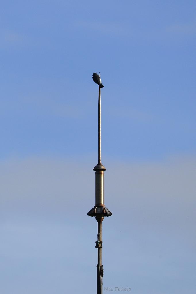 bird_9295w
