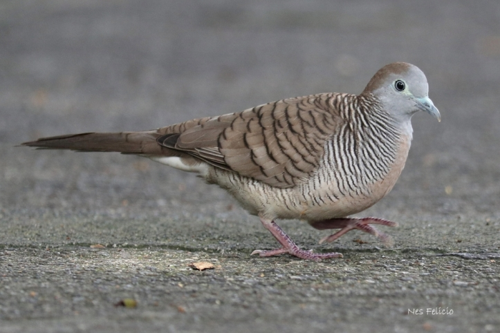 birds_0199
