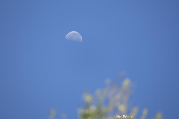 moon_9319
