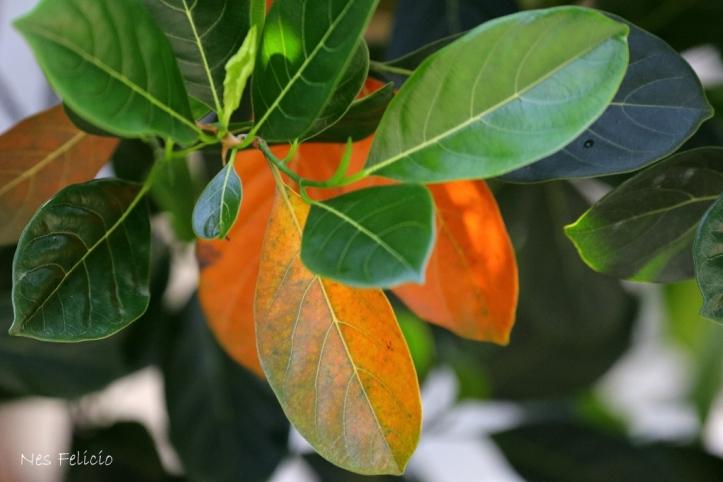 leaves_1239