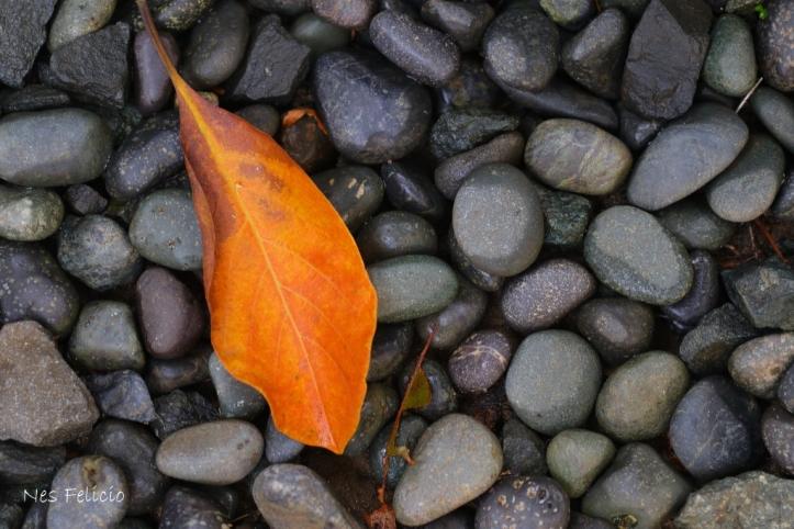 leaves_1255