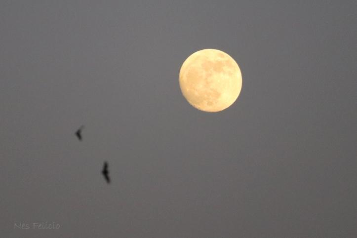 moon_1390