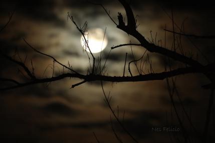 baler_moon_5956