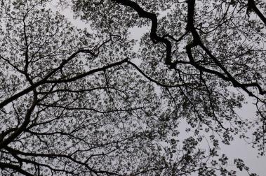 leaves_5153