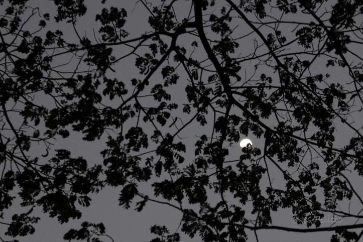 moonleaves_5146a