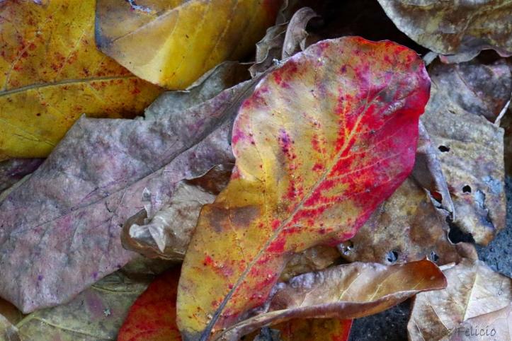 leaves_5134