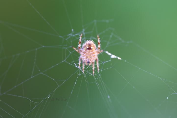 spider_7411