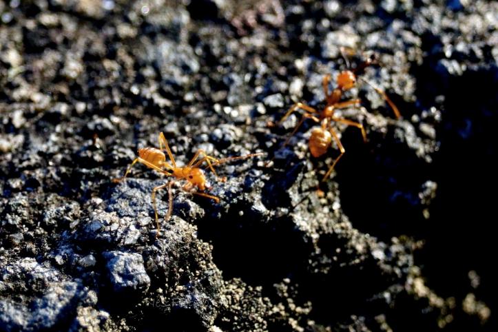 ants_1318