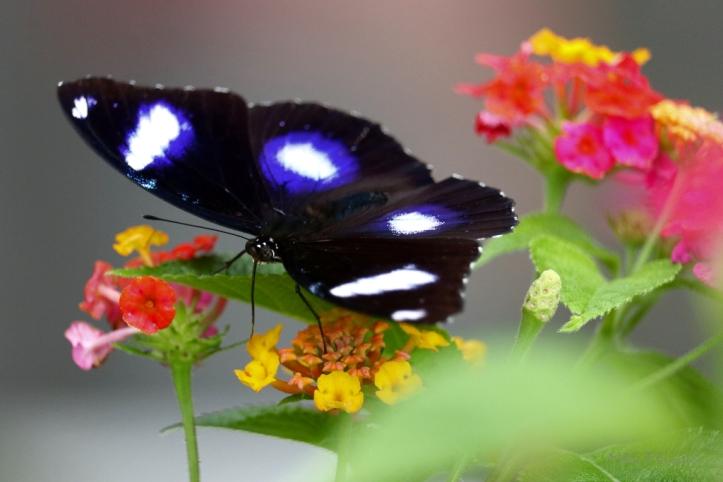 butterfly_9649