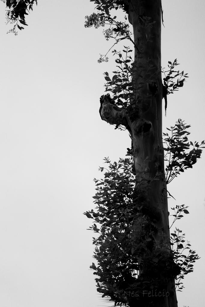 tree_9701