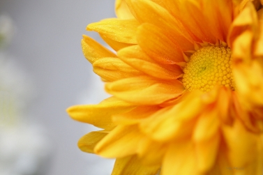 flowers_7874a