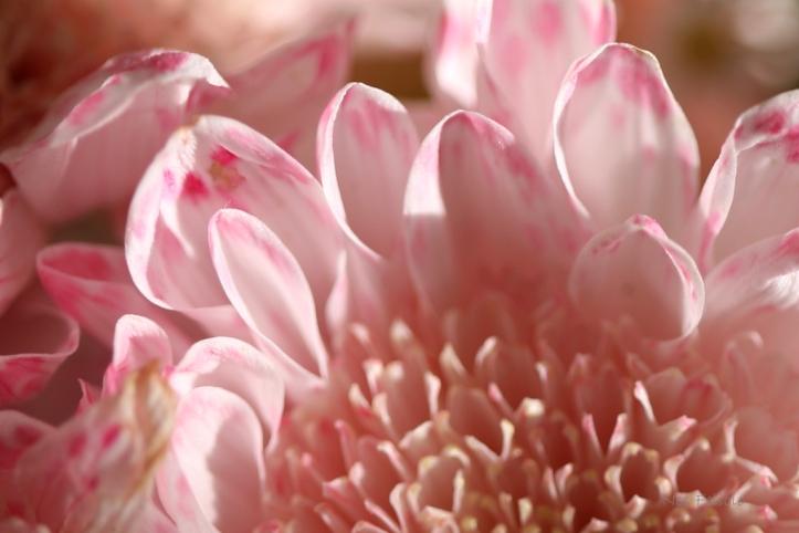 flowers_7969