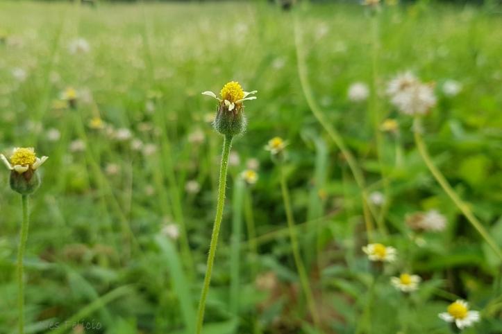 flower_092312