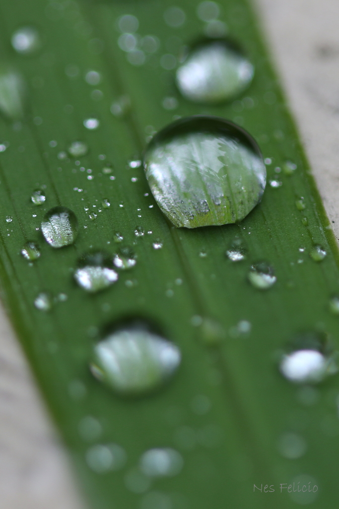 leaf_8957