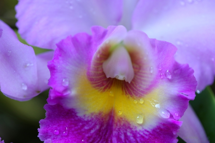 orchid_8575