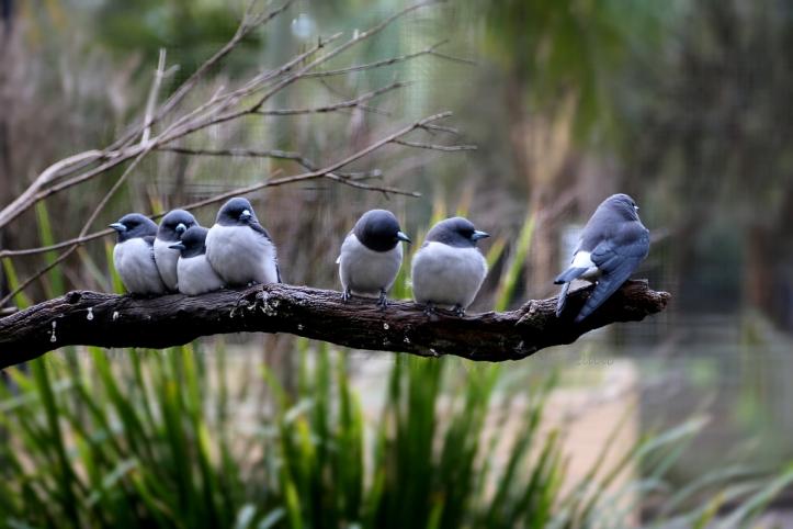 birds_1722b