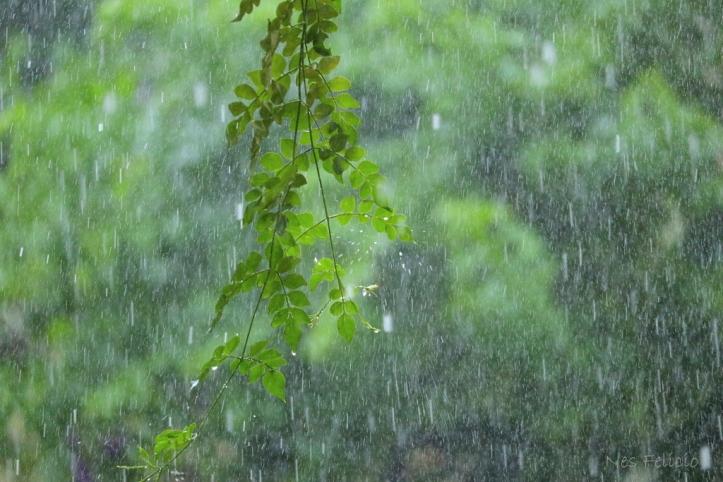 rain_1535