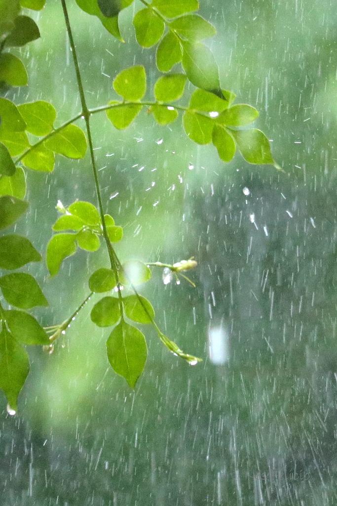 rain_1535c2