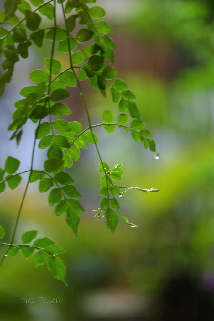 rain_1567