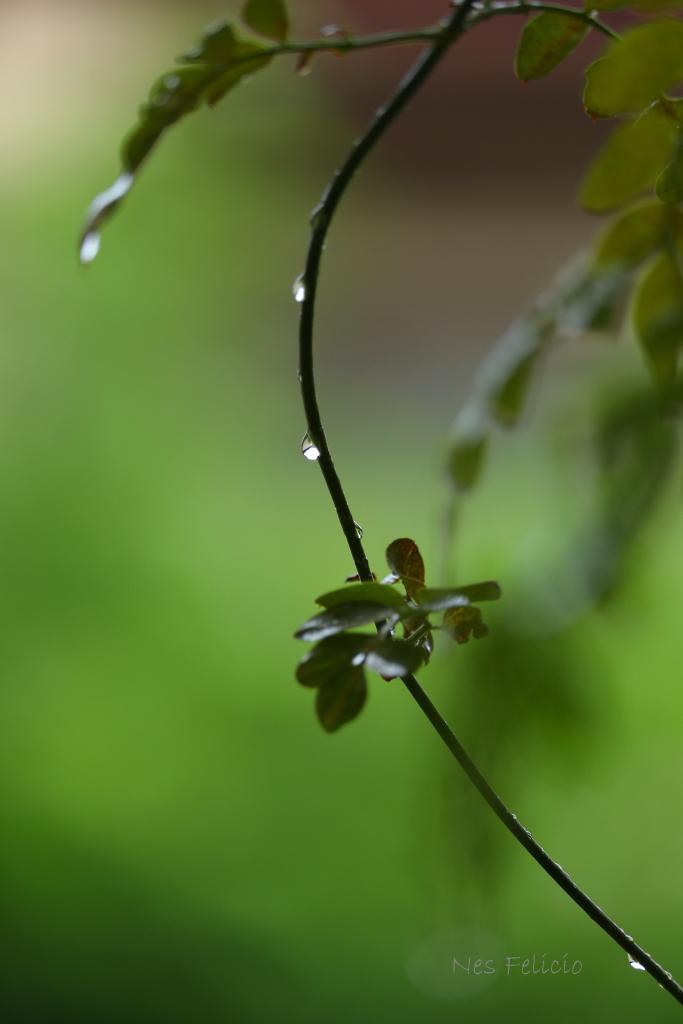 rain_1584